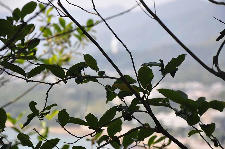 Plants: image 56 0f 58 thumb